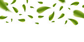 Creative vector illustration of realistic blurred fresh vividly flying green leaves isolated on transparent background. Art design green tea. Abstract concept graphic organic natural eco element.