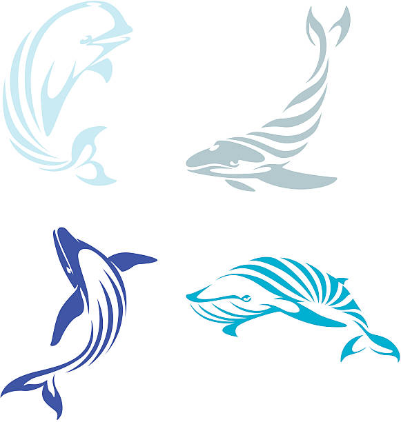 Creative Whale Illustrations Creative illustrations of two blue whales, one humpback whale, and one beluga whale. beluga whale stock illustrations