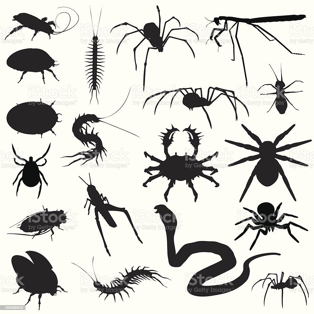 Creepy Crawlies! Bugs Spiders Snakes royalty-free stock vector art