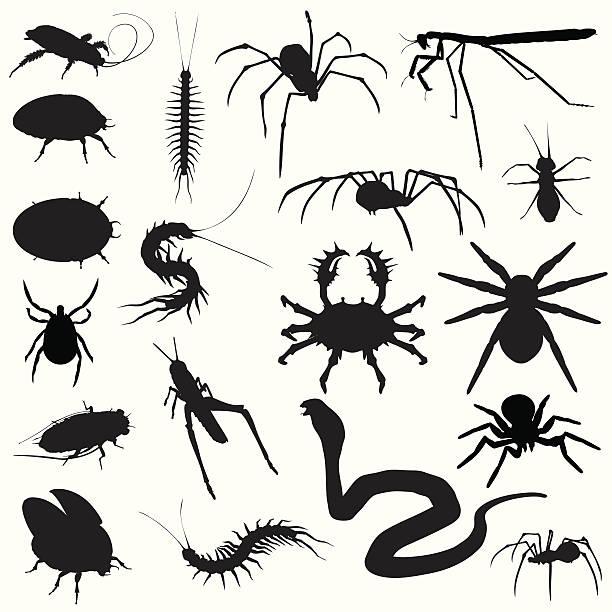 creepy crawlies! bugs spiders snakes - tarantula stock illustrations