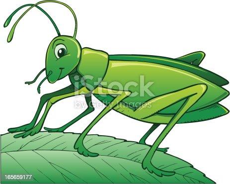 Illustration of cricket on a leaf...