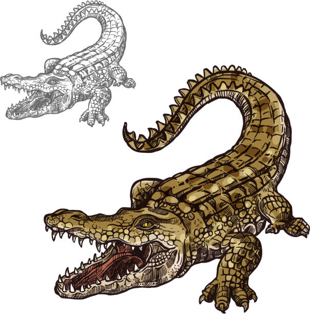 crocodile alligator vector isolated sketch icon - alligator stock illustrations