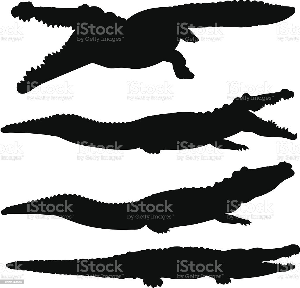 alligator, Crocodile et silhouette ensemble - Illustration vectorielle