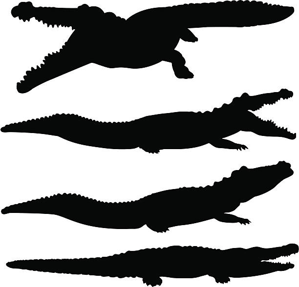 crocodile and alligator silhouette set - crocodile stock illustrations