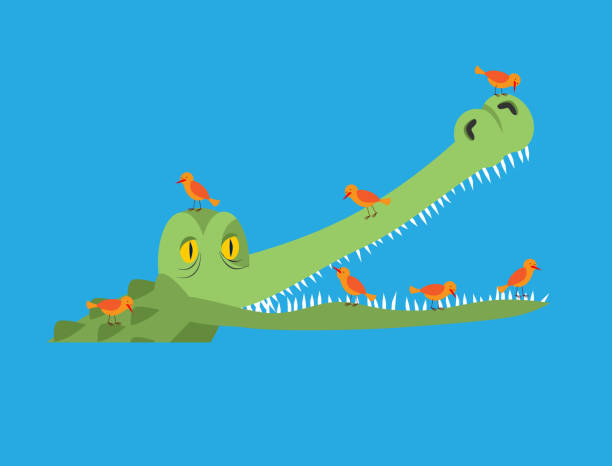 Crocodile and bird. Little birds clean alligator teeth. Symbiotic relationship Crocodile and bird. Little birds clean alligator teeth. Symbiotic relationship water bird stock illustrations