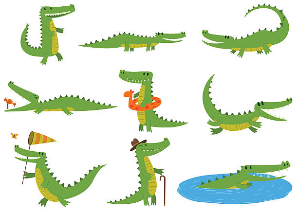 stockillustraties, clipart, cartoons en iconen met crocodile character vector set. - wildplassen