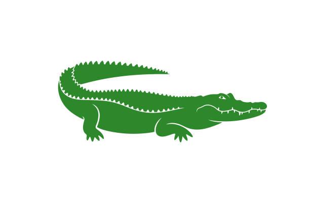 Crocodile logo. Abstract crocodile on white background EPS 10. Vector illustration crocodile stock illustrations