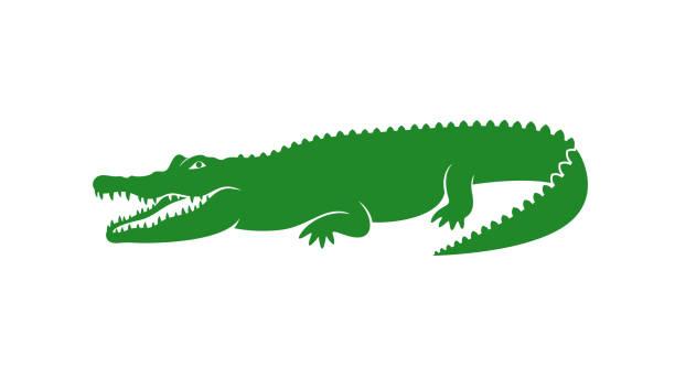 crocodile logo. abstract crocodile on white background - alligator stock illustrations