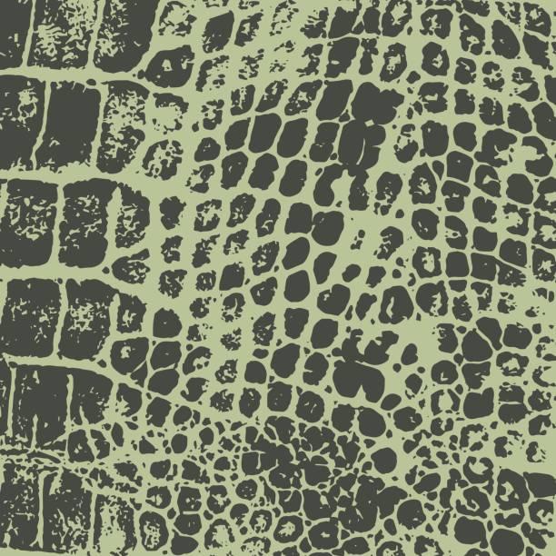 Crocodile skin. Vector texture. Imprint. Crocodile skin. Vector texture. Imprint. Decorative background crocodile stock illustrations
