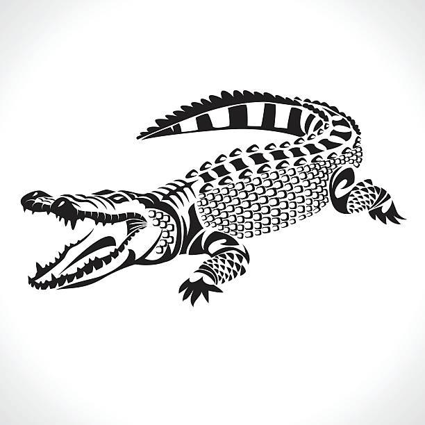 ilustrações, clipart, desenhos animados e ícones de crocodilo - fontes de tatuagem