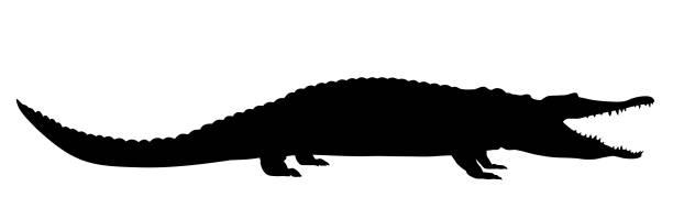 crocodile - alligator stock illustrations