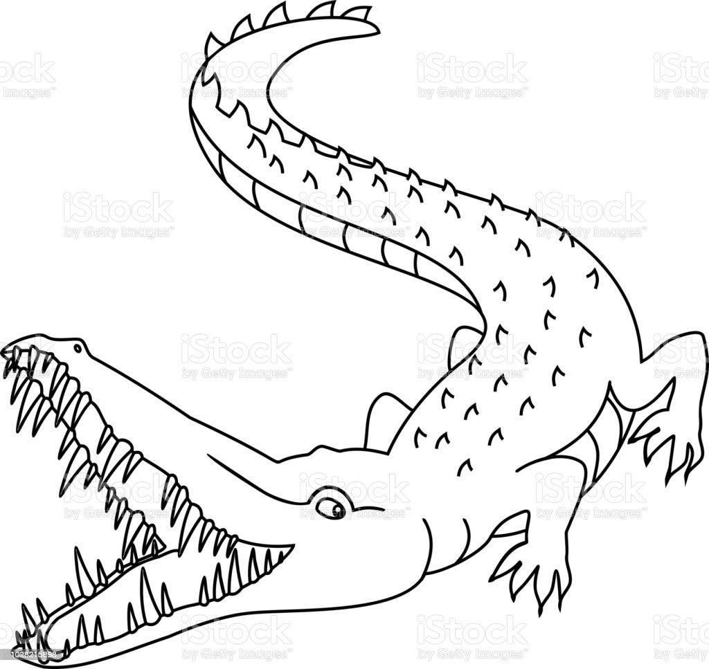 Crocodile A Pleine Bouche Coloriage Vecteurs Libres De Droits Et