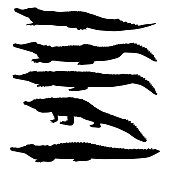 Set of vector silhouettes of crocodiles in different poses isolated on white background