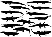 Collection of silhouettes of  different species of crocodiles