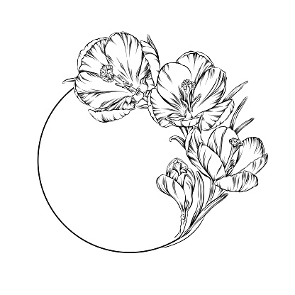 Crocus flowers in a circle pen and ink illustration. Vector EPS10 file.