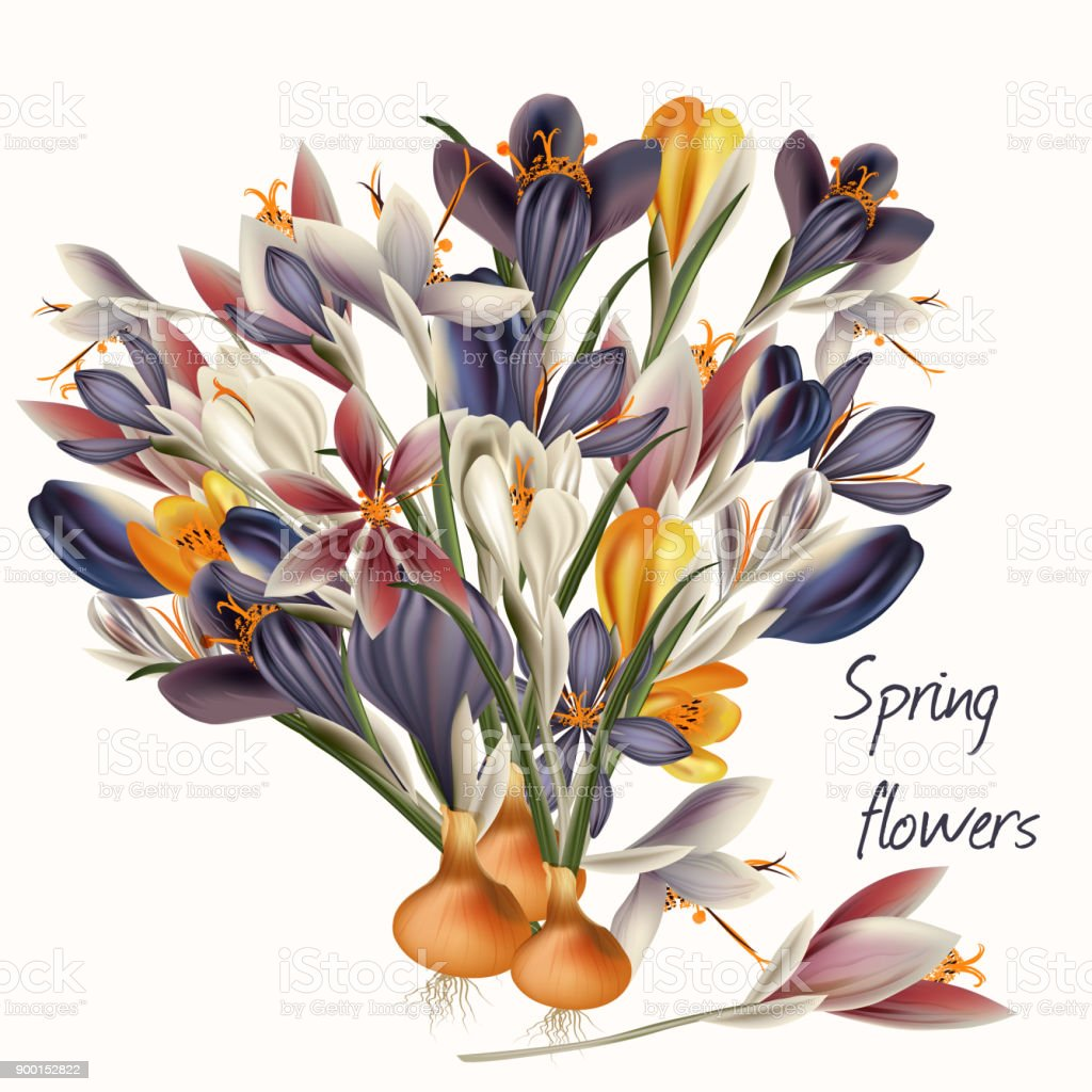 Crocus flowers in pastel colors