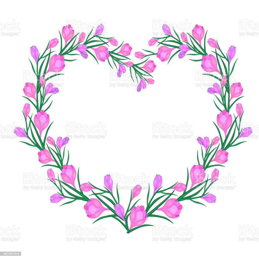 Crocus or saffron, hearts vector art illustration