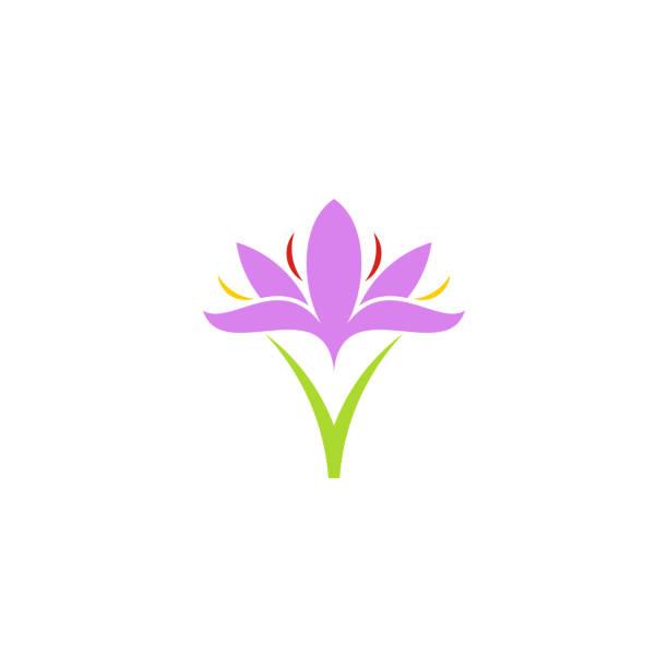 illustrations, cliparts, dessins animés et icônes de crocus. fleur pourpre - crocus