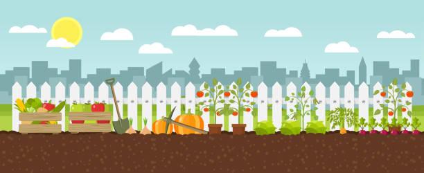 crop growing Flat Design growing vegetables urban gardening stock illustrations