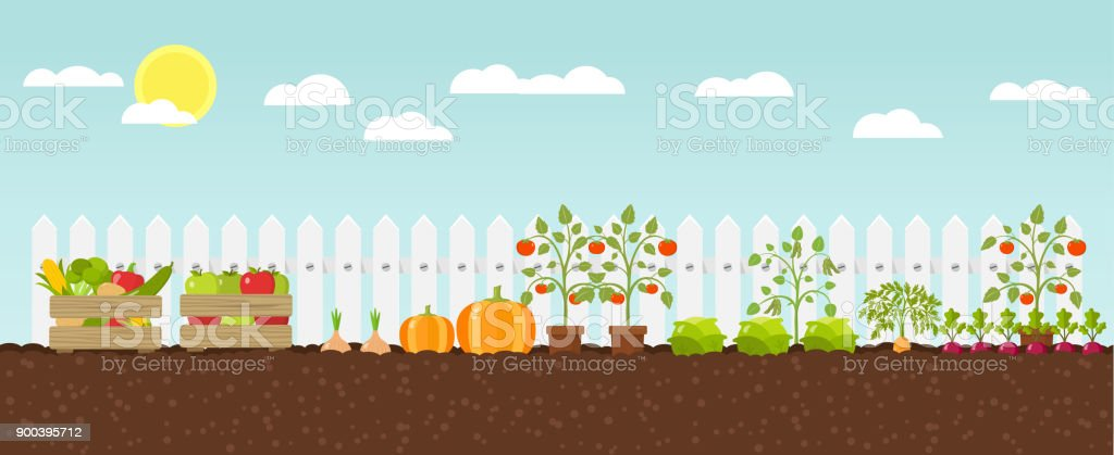 crop growing Flat Design vector art illustration
