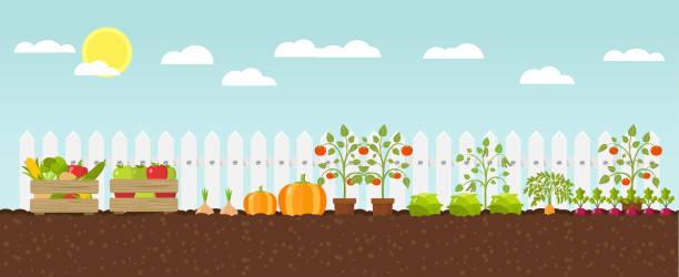 crop growing Flat Design growing vegetables gardening stock illustrations