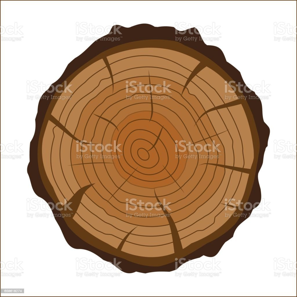 Cross Section Of Tree Stump Or Trunk Wood Cut Stock