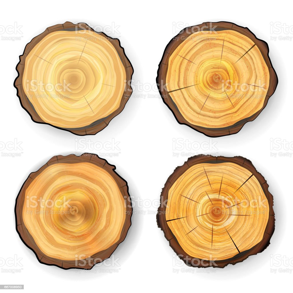 cross section tree set wooden stump vector circles texture isolated rh istockphoto com wood vector panel installation wood vector background