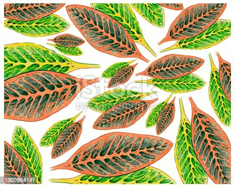 istock Croton Plantห with Yellow and Green Leaves Background 1302684147