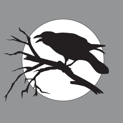 crow in the night