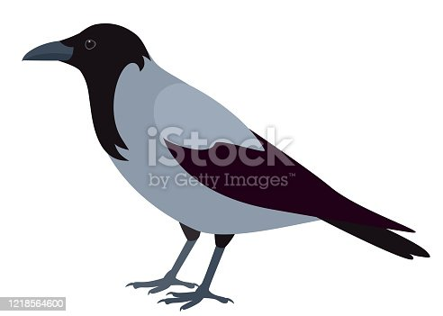 istock Crow isolated on white background 1218564600