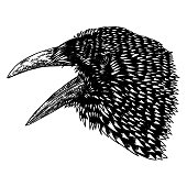 Crow isolated on white. Hand drawn art sketch. Black Raven head. Bird on white background. Witchcraft magic, occult attribute decorative element. Vector.