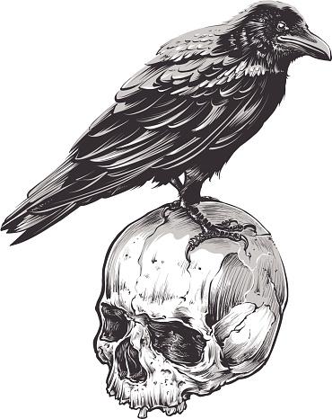Cuervo en cráneo