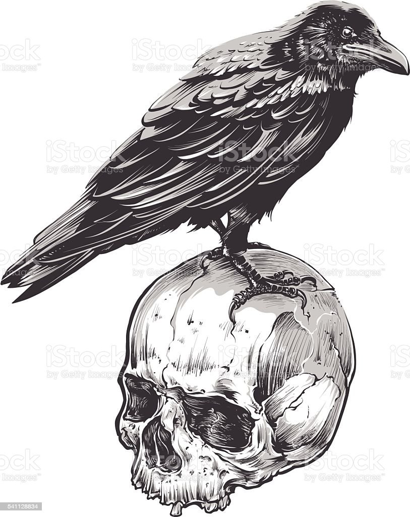 Crow on Skull vector art illustration