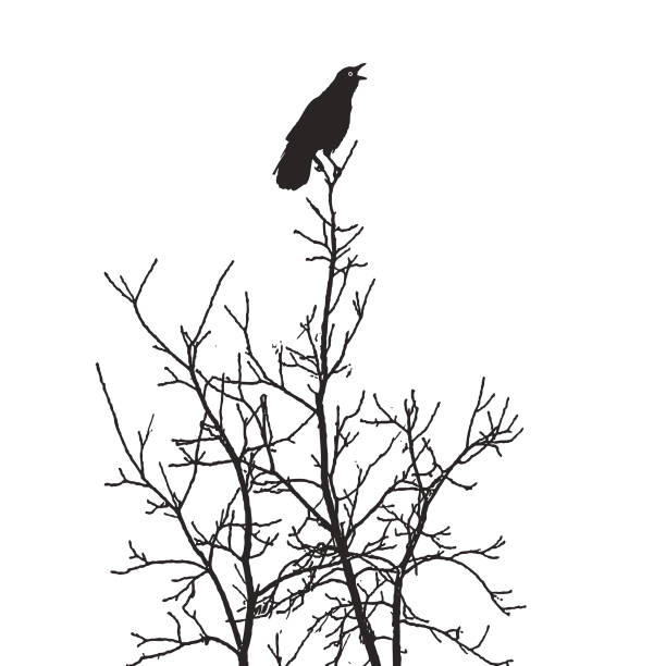 Crow perching in tree giving an alarm caw Silhouette of a Crow perching in tree giving an alarm caw goth stock illustrations