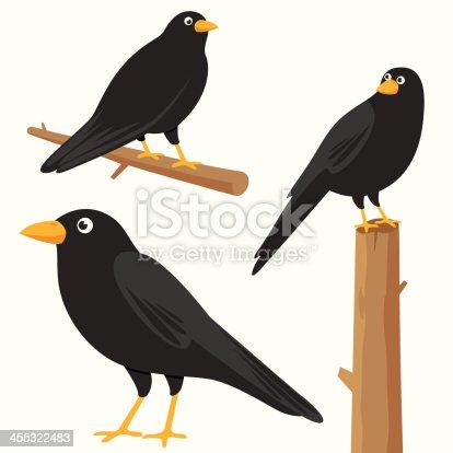 istock Crow 455322483