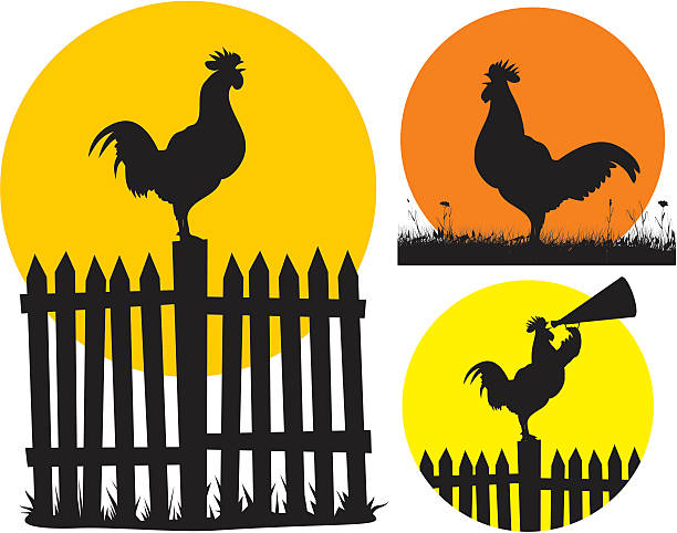 crowing cock and rising sun vector silhouettes of crowing rooster on the background of the rising sun rooster stock illustrations