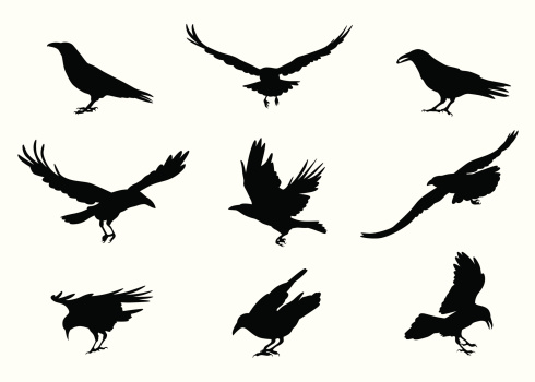Crow-ing Vector Silhouette