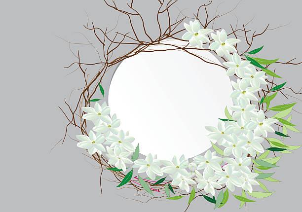 crown jasmine flowers isolated on white background, - alpenveilchen stock-grafiken, -clipart, -cartoons und -symbole