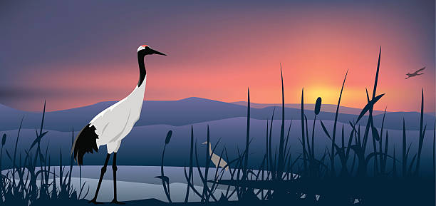 crowned crane - crane bird stock illustrations