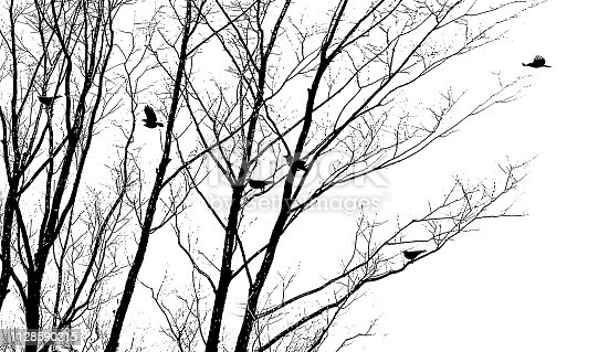Silhouette vector of Crows flying and landing in winter trees