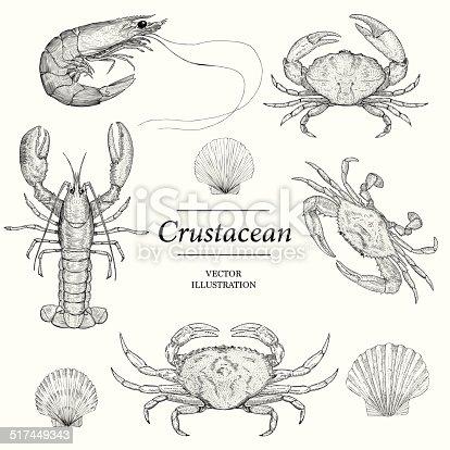 Crustacean Vector illustrations