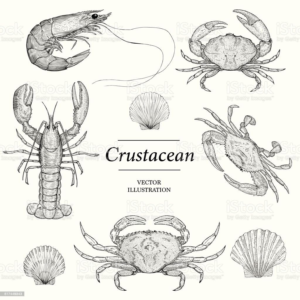 Crustacean vector art illustration