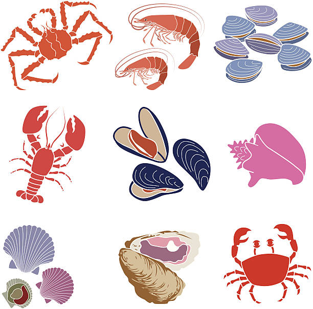 crustaceans, shellfish and mollusks - scallop stock illustrations, clip art, cartoons, & icons