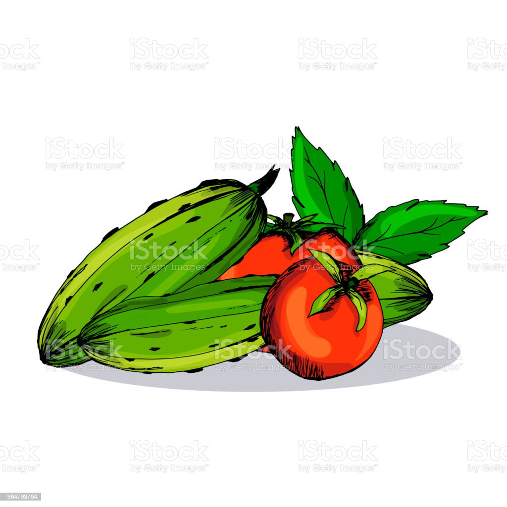 Cucumber. A tomato. Pickles. Blanks for the winter. Hand drawing. Print, sticker. Organic. royalty-free cucumber a tomato pickles blanks for the winter hand drawing print sticker organic stock vector art & more images of agriculture