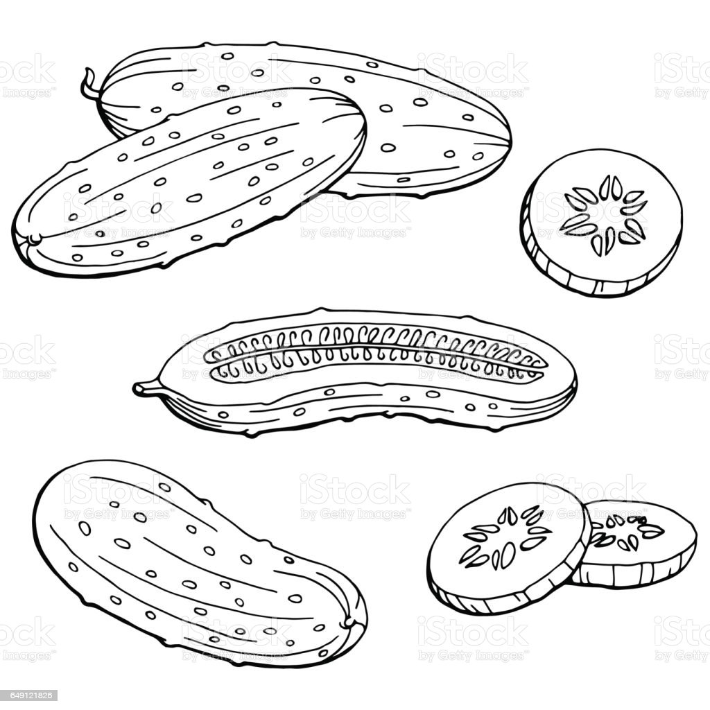 Cucumber graphic black white isolated sketch illustration vector vector art illustration