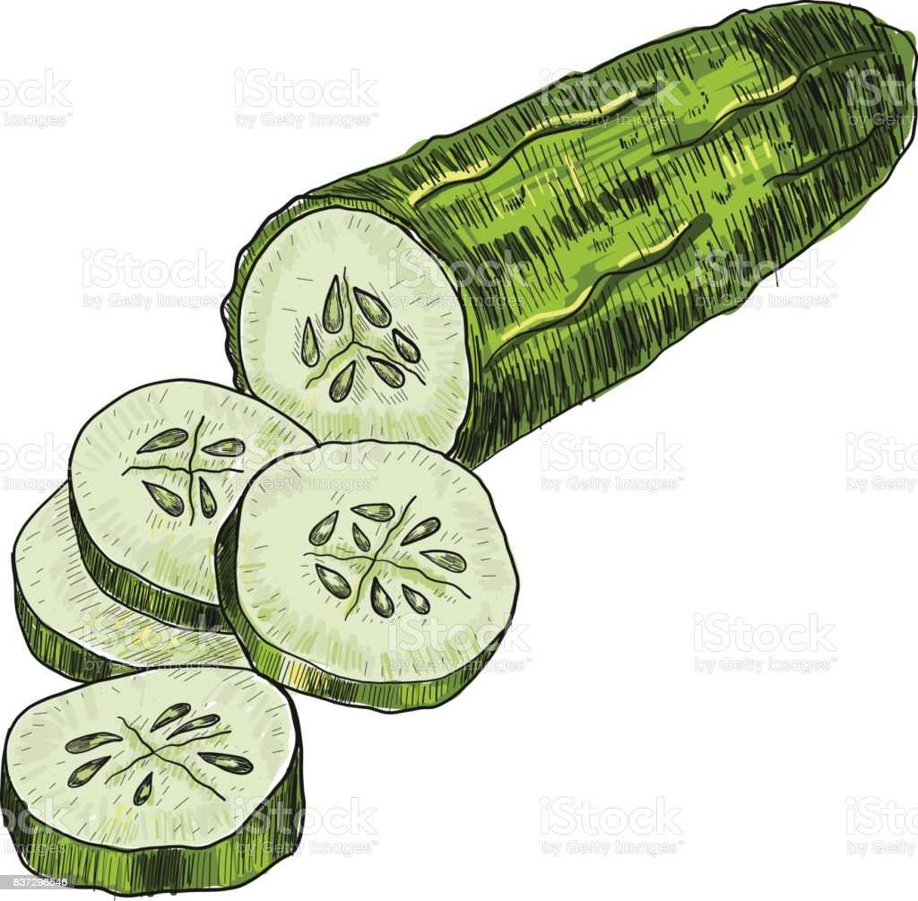 Cucumber Hand Drawn Vector Isolated Cucumber Vegetable Engraved ... for Drawing Cucumber  117dqh