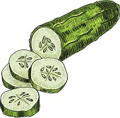 Cucumber hand drawn vector. Isolated cucumber. Vegetable engraved style illustration. Detailed vegetarian food drawing. Farm market product.