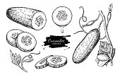 istock Cucumber hand drawn vector set. Isolated cucumber, sliced pieces 546765882