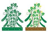 cucumber plant vector
