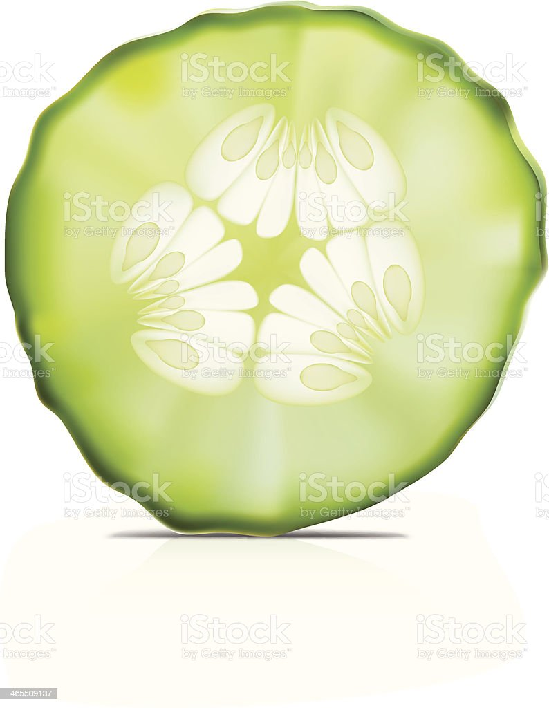 Cucumber- Vector illustration vector art illustration